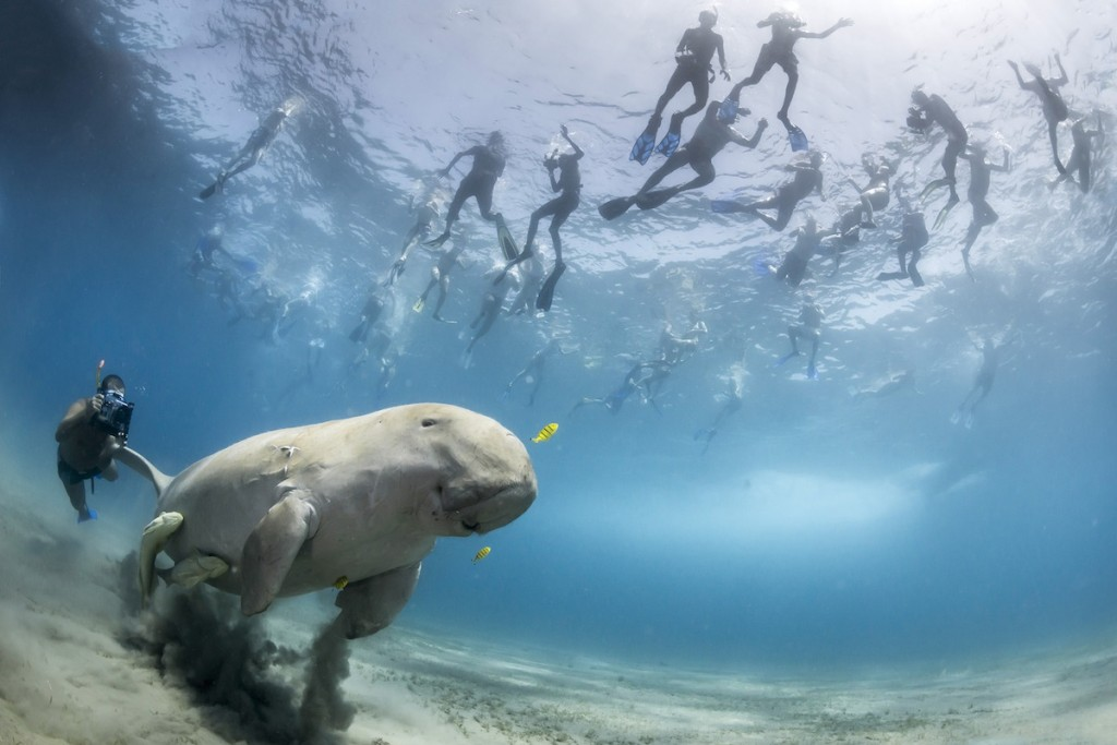Wildlife Photographer of the Year is owned by the Natural History Museum and BBC Worldwide. Foto: © Douglas Seifert (USA)
