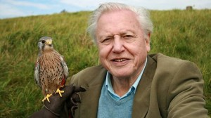 David Attenborough. Foto: SVT