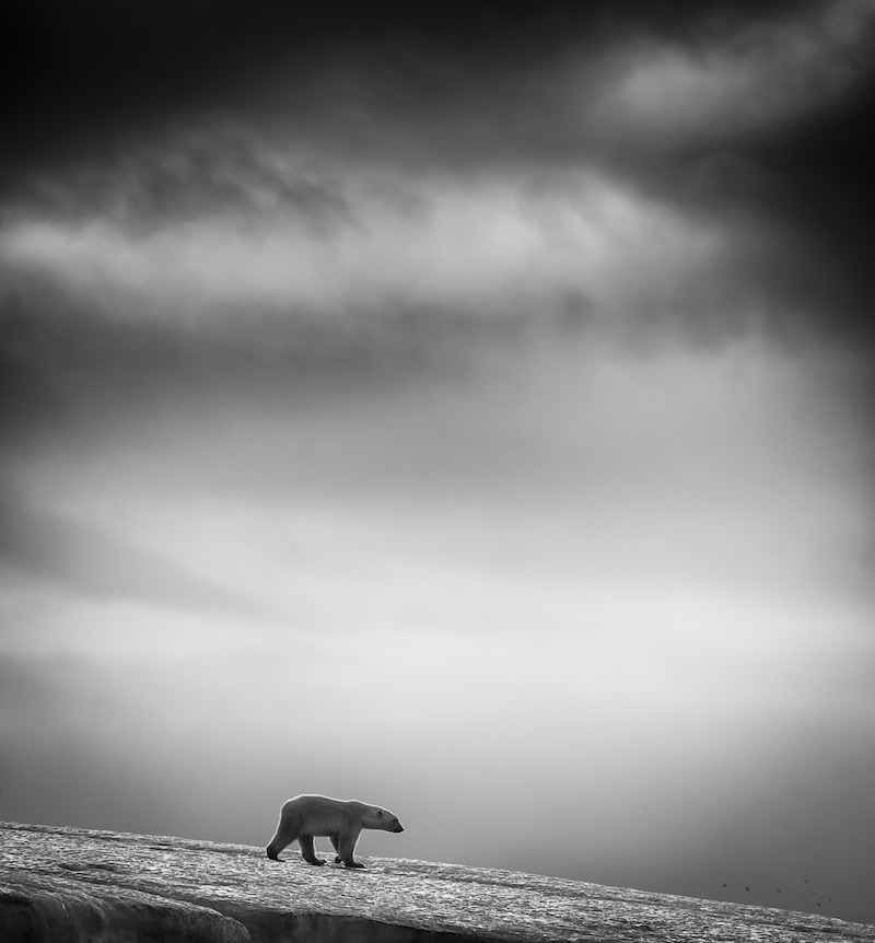 Foto: Wilfred Berthelsen, Norge, Sony World Photography Awards
