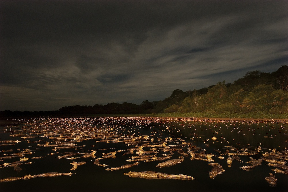 """Caiman night"", Luciano Candisani (Brasilien)"