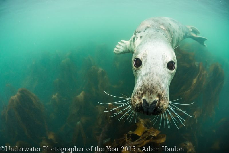 BRITISH WATERS WIDE ANGLE HIGHLY COMMENDED: 'Big Eyes' - Adam Hanlon
