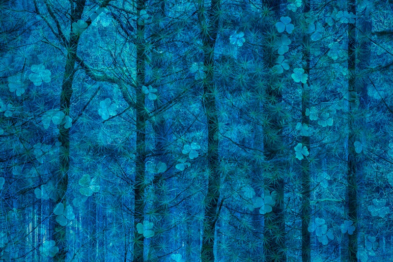 2nd place | nature's studioSimone Baumeister - Forest in blue Double exposure, this is how happiness grows on trees