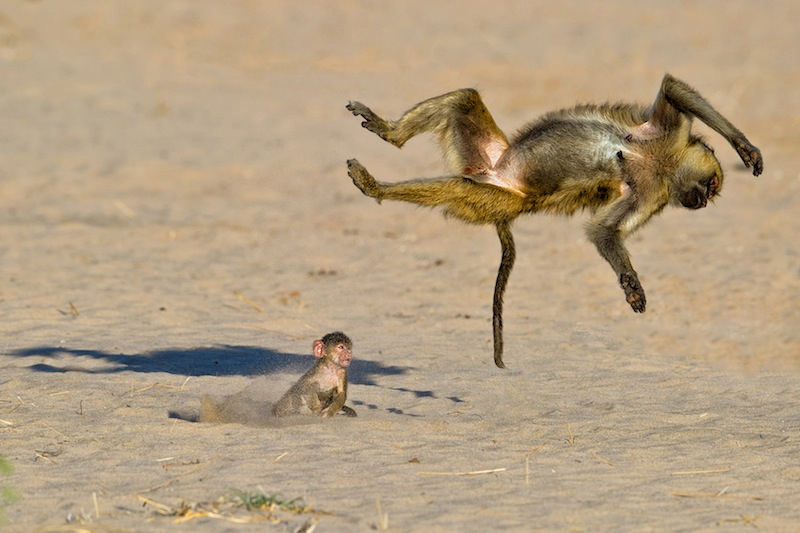 (c) Marc Mol / Comedy Wildlife Photography Awards