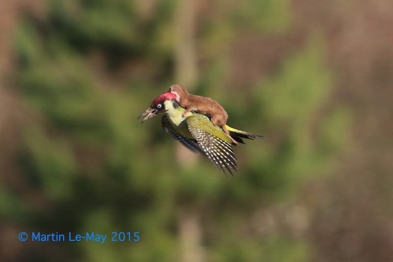 (c) Martin Le May / Comedy Wildlife Photography Awards
