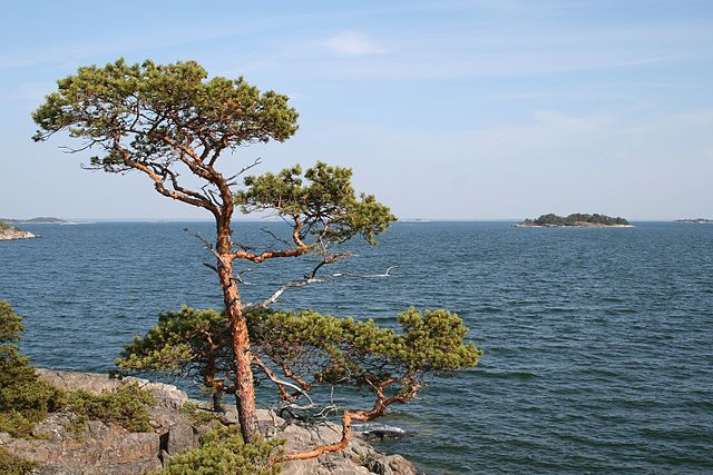 Nationalpark i Finlands skärgård. Foto: Asea - Oma teos. Licensierad under CC BY 2.5 via Wikimedia Commons - https://commons.wikimedia.org/wiki/File:Gullkrona_01.jpg#/media/File:Gullkrona_01.jpg