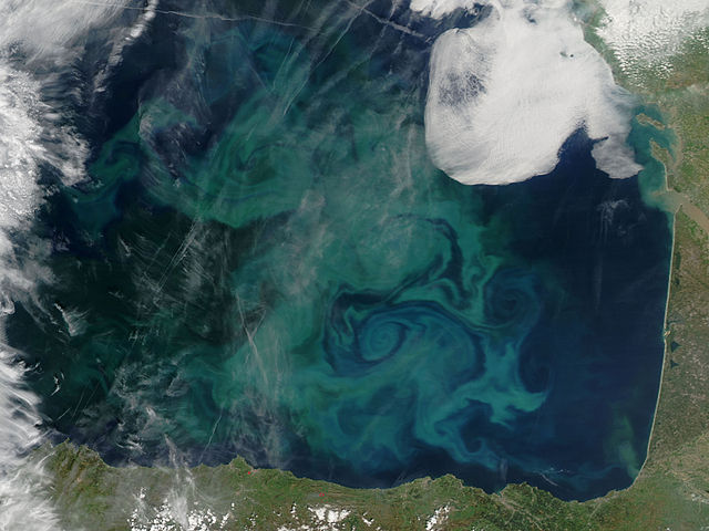 Algblomning i Biscayabukten. Foto: NASA - The MODIS scientific instrument, from this search and this page, Public Domain, https://commons.wikimedia.org/w/index.php?curid=2527275
