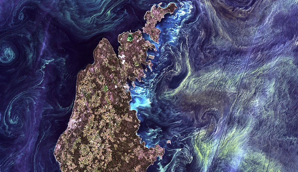 Algblomning vid Gotland. Arkivbild. Foto: NASA Goddard Space Flight Center Credit: USGS/NASA/Landsat 7 - Flickr: Van Gogh from Space, CC BY 2.0, https://commons.wikimedia.org/w/index.php?curid=20421392